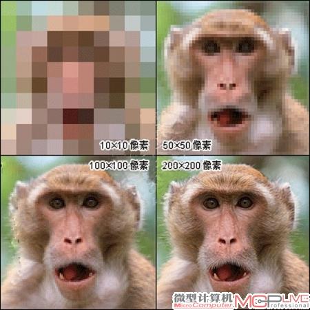 大小不同动物对比图片